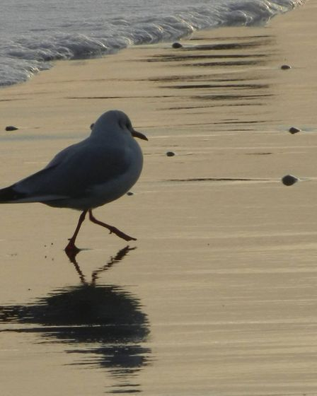 Withernsea: gull on the sand