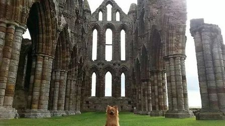 Ozzy at Whitby Abbey by Lynn Starling