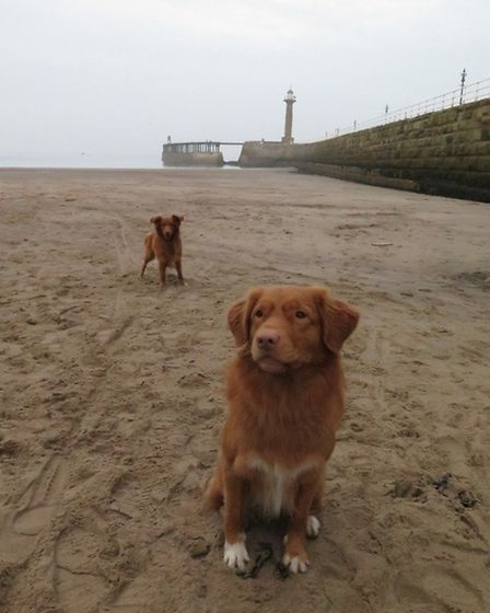 Piper and Toby in Whitby by Mark Brock