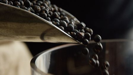 Juniper is the predominant botanical in gin. Photo: Madeline Penfold