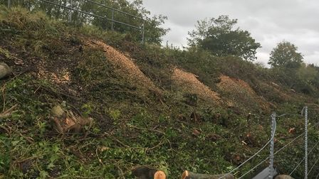 Trees have been felled by Network Rail along the Norwich line. Picture: Sophie Greenwood