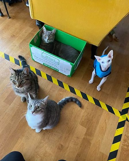 The four cats at Darling Darlings cat cafe on Howard Street South in Great Yarmouth. Picture: Caroli