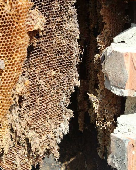 Buzz-Off, bee removal experts from Norwich, visited the McKelvey's home in Newton Flotman after conc