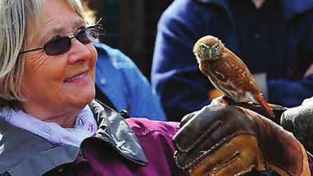 Falconry Experience Day at Denby