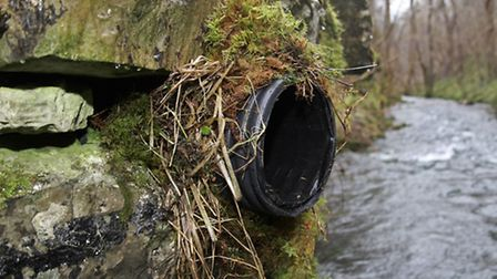 One of the artificial nests constructed by conservationists