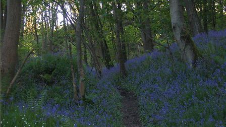 Find bluebells amongst the wild flowers at Burrs Wood.