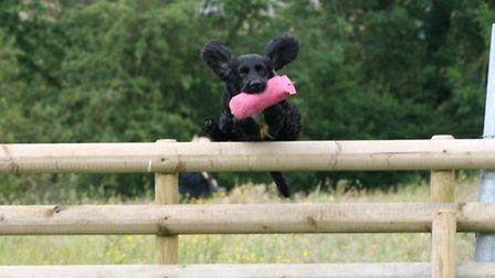 Clearing a fence with a training retrieve