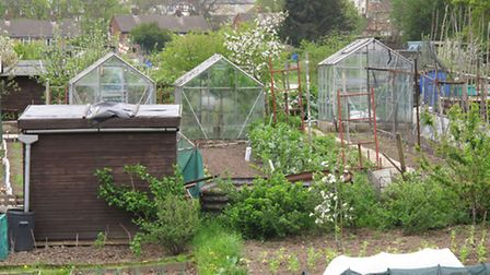 Green amongst the grey - a typical town allotment