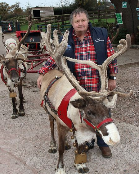 Steve with members of the 150-strong herd at Blithbury Reindeer Lodge