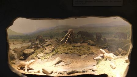 Remains of Prehistoric animals that once roamed Derbyshire in Buxton Museum