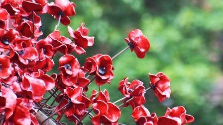 The poppies came home to Derby