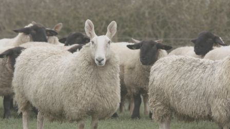 Woolroom products use platinum certified British Wool