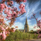 May Blossom, St Alkmund's Church