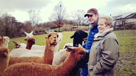 Alpaca blood donation event at Scarsdale Vets with BBC Countryfile Photo: Scarsdale Vets