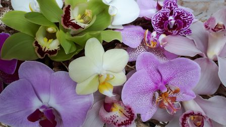 Different varieties of orchid