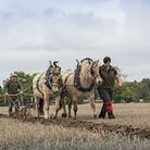 Gordon McKay from Doncaster ploughing with his pair of Norwegian Fjord ponies Lofty and Thor