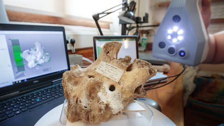 A vertebra of the dream cave woolly rhino being 3-D scanned at the Oxford Museum of Natural History