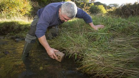Nick Mott relocating crayfish to the ark site