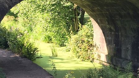 Bridge over the Cromford Canal by Sally Moseley