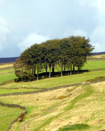 A copse known as 'Twenty Trees' on the approach to Hayfield