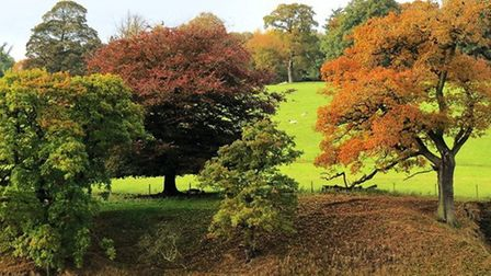 Chatsworth's beautiful parkland by Sally Mosley