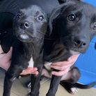 Amber and Poppy had been microchipped but the chip had not been activated. Picture: RSPCA