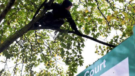 Extinction Rebellion protesters took to the trees at Dixon Clark Court on Sunday to protect them fro