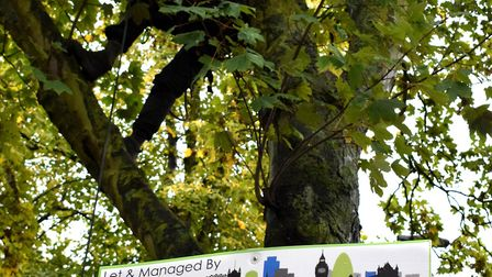 Protesters take to the trees at Dixon Clark Court in a last ditch bid to save them. Picture: Polly H