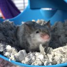 Pumpkin, who is six months old, would like to be rehomed with Boo, Ghost, Spook and Spirit.Picture: BLUE CROSS
