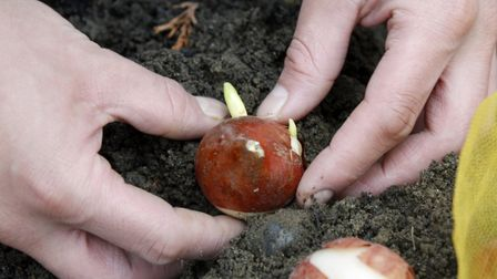 Planting bulbs is a minefield with squirrels trying to steal them. Picture PA