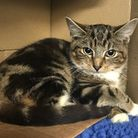 Leia was found dumped outside Petals Florist in Mead Lane, on October 24. Picture: RSPCA