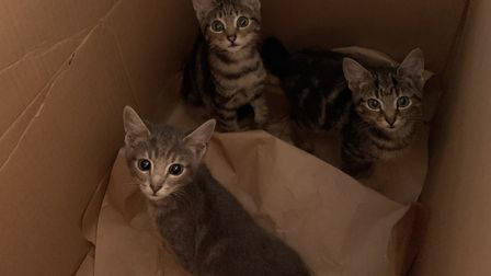 These three kittens were abandoned in the same place on August 29. Picture: RSPCA
