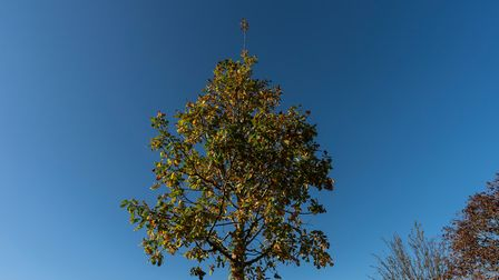 An oak tree was planted in memory of the lives lost and to mark the tragedy. Picture: Andrew Baker