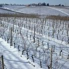 High vineyards in Piedmont, home of Italy's first sparkling wine.