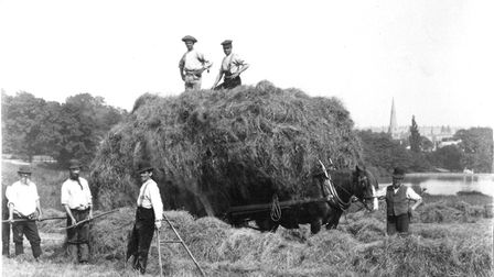 Haymaking on the South Meadow, 1891. Picture: courtesy of Michael Hammerson