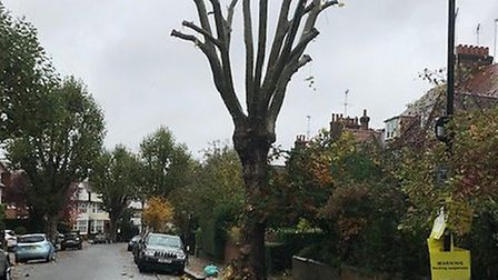 Camden Council's tree pollarding has upset residents in Redington Frognal. Picture: RedFrog Associat