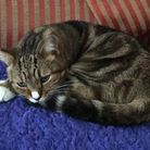 Tabs at his new home, found by Wood Green, The Animals Charity. Picture: Wood Green, The Animals Cha
