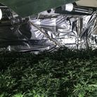Police seize cannabis worth £1 million from NW2. Picture: Met Police