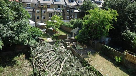 The remaining tree stumps and chopped down branches which were left after a resident hacked down two trees.