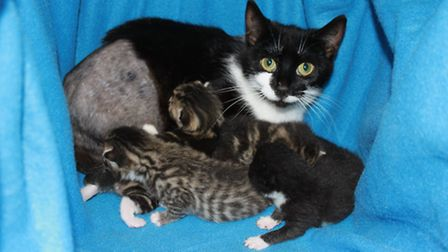 Mona, who had her leg amputated, and her four kittens. Picture: Celia Hammond