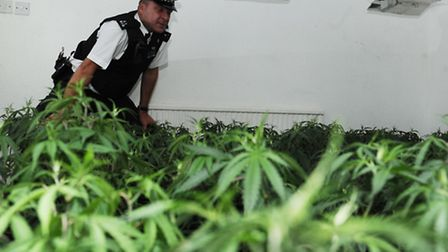 Pc Pete Williams with the hundreds of cannabis plants found during a different raid