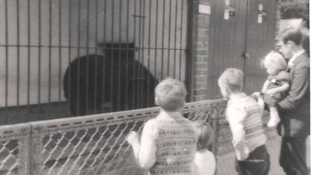 The bear. Picture: Alanna Yeomans