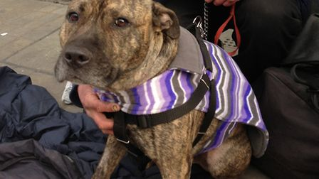 The Give a Dog a Coat Appeal is urging people to knit dog coats or donate old ones for dogs with homeless owners. Picture:...