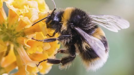 A Generic Photo of a Bee, PA Photo/thinkstockphotos. WARNING: This picture must only be used to accompany PA Feature...