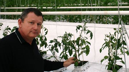 Richard Lewis with the newly-planted tomatoes at Blakenham. Picture: PAUL GEATER