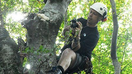 David Humphreys in full flow in a Hampstead Heath tree. Picture: City of London Corporation