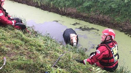 Crews from Wisbech and Dogthorpe were called to Wales Bank in Elm to rescue Penny the pony who was found in a ditch after...