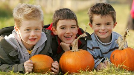 Willows Activity Farm is a great place to get pumpkins for BID's virtual pumpkin carving competition. Picture: Willows...