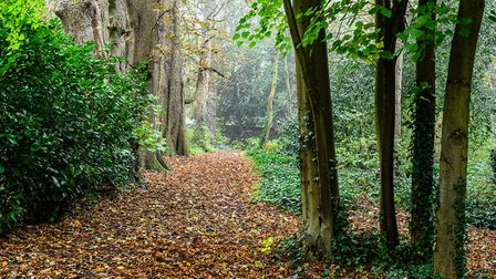 A leafy path at Caldrees Manor, Ickleton. Picture: Simon Baylis for The National Garden Scheme