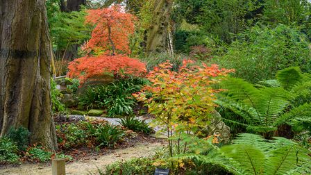 Caldrees Manor, Ickleton. Picture: Simon Baylis for The National Garden Scheme